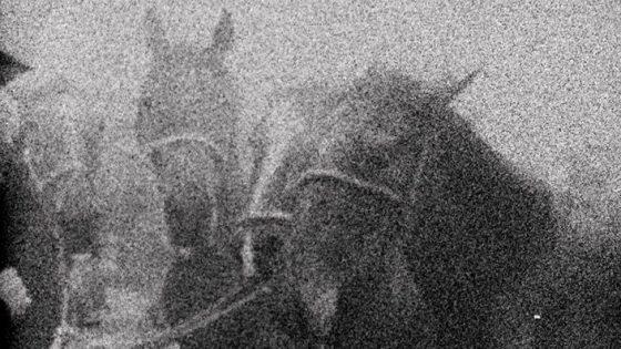 3 dream horses picture